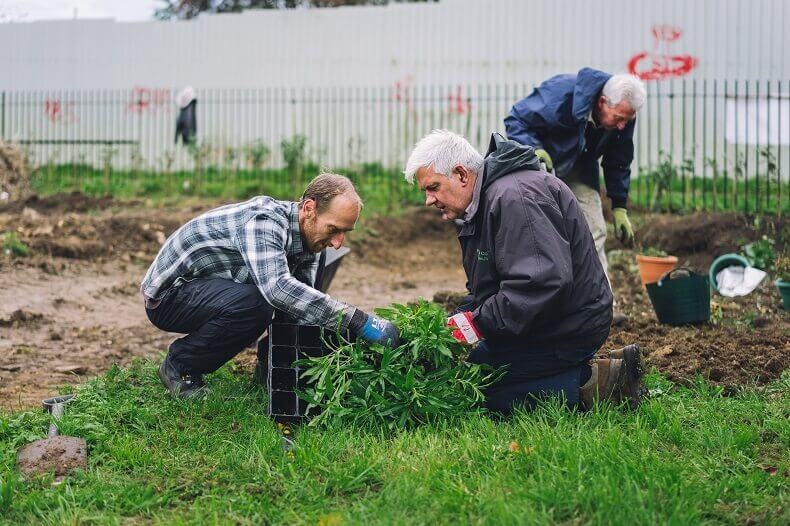 Three men of varying ages kneel in the dirt to plant a bushy shrub in a garden bordered by a black fence.