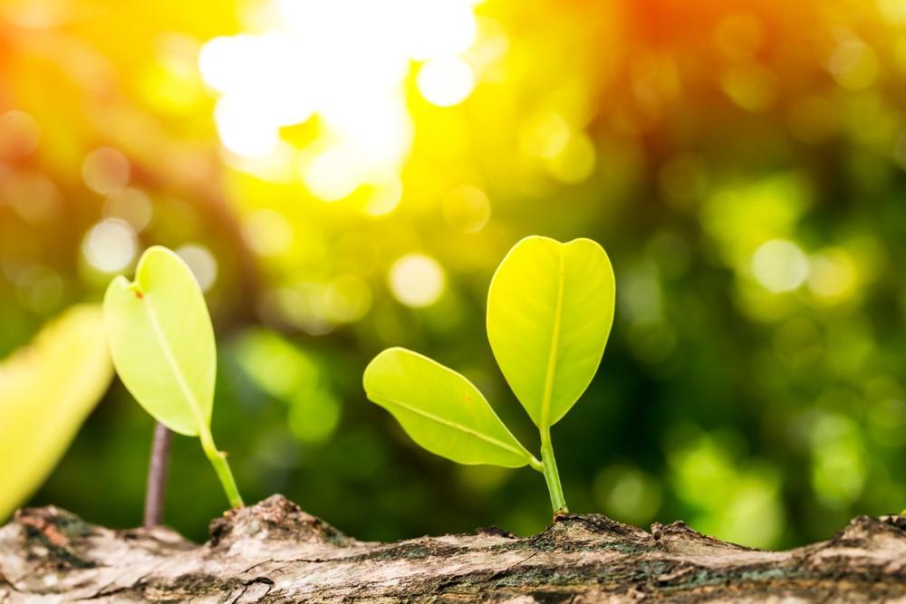 Growing plants in sunlight.
